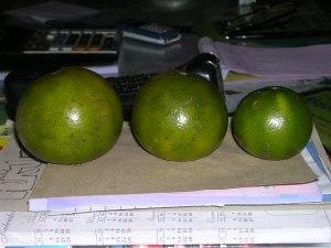 perbandingan jeruk