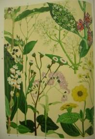 lujisan flora