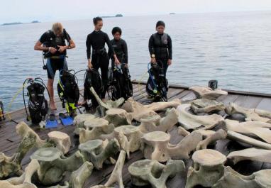 Tulang paus yang berhasil diangkat ke daratan.