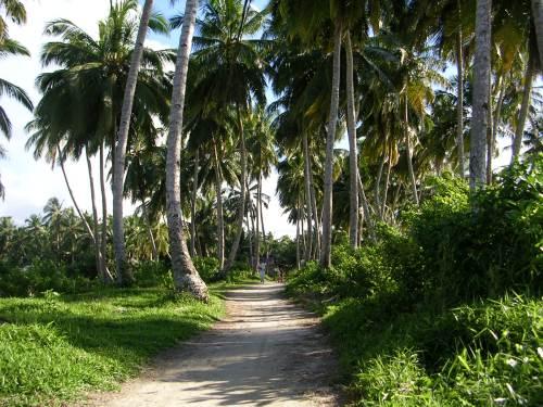 Jalan desa di pedalaman desa Tua Peijat, Sipora, Mentawai. (dok.sulung prasetyo)
