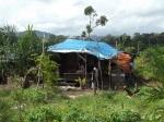 soc.sulung prasetyo Kamp buruh sawit di Kalimantan Timur masih jauh dari standar layak.