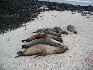 dead_sea_lions