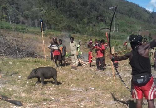 Memanah babi menjadi salah satu bagian acara adat yang dilakukan usai upacara 17 Agustus 2015 di Ugimba, Papua.