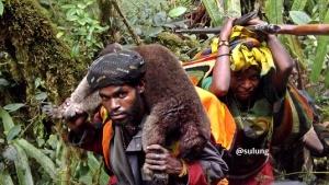 Pemburu suku Moni, Papua sedang membawa kangguru pohon, pertengahan Agustus 2015.